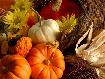 happy thanksgiving - time to be grateful for pumpkins!